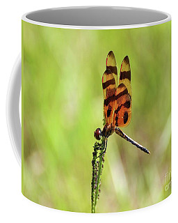 Halloween Pennant Coffee Mug by Al Powell Photography USA