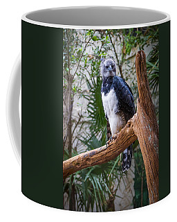 Coffee Mug featuring the photograph Harpy Eagle by Ken Stanback