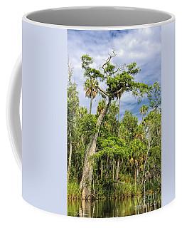 Hatrack Cypress Coffee Mug