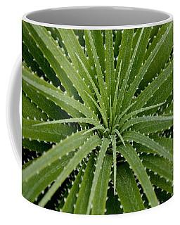 Hechtia Argentea Coffee Mug
