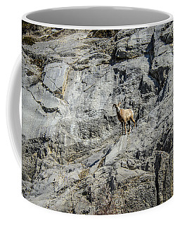 Big Horn Sheep Coming Down The Mountain  Coffee Mug