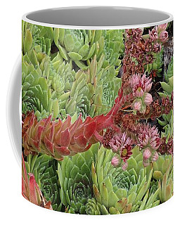 Hen And Chick In Bloom Coffee Mug