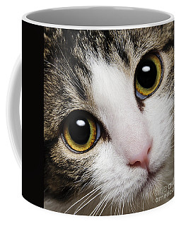 Here Kitty Kitty Close Up Coffee Mug