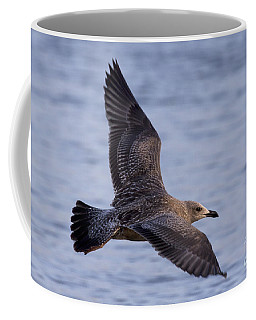 Coffee Mug featuring the photograph Herring Gull In Flight Photo by Meg Rousher