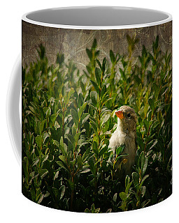 Coffee Mug featuring the photograph Hide And Seek by Mariola Bitner