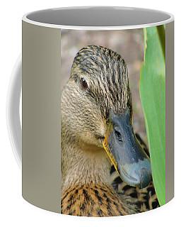 Hide And Seek Coffee Mug by Tiffany Erdman