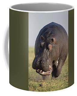 Hippopotamus Bull Charging Botswana Coffee Mug