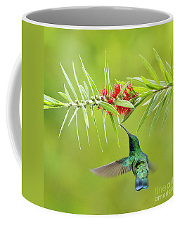Honey Sucking Coffee Mug