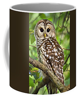 Coffee Mug featuring the photograph Hoot Owl by Christina Rollo
