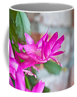Hot Pink Christmas Cactus Flower Art Prints Coffee Mug by Valerie Garner