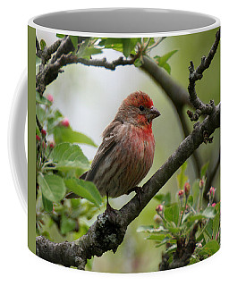 House Finch In Apple Tree Coffee Mug