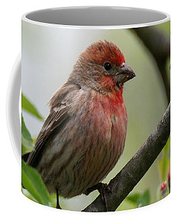 Coffee Mug featuring the photograph House Finch In Apple Tree by William Selander