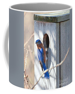 Coffee Mug featuring the photograph House Hunting by Kerri Farley
