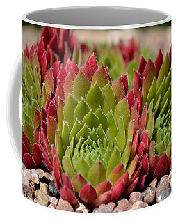 Houseleeks Aka Sempervivum From The Side Coffee Mug