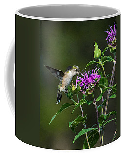Hummer On Bee Balm Coffee Mug