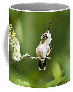 Coffee Mug featuring the photograph Hummingbird Flexibility by Christina Rollo