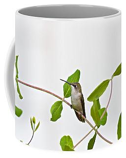 Hummingbird Hanging Out On The Honeysuckle Coffee Mug