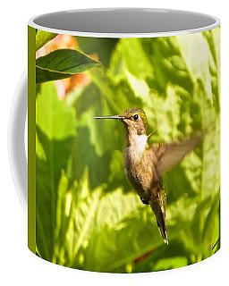 Hummingbird Highlighted By The Sun Coffee Mug