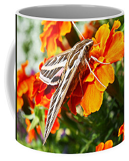 Hummingbird Moth On A Marigold Flower Coffee Mug by Nadja Rider