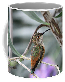 Hummingbird On A Branch Coffee Mug