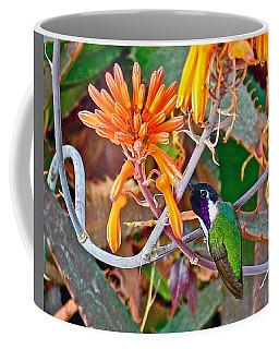 Hummingbird On Aloe In Living Desert In Palm Desert-california Coffee Mug