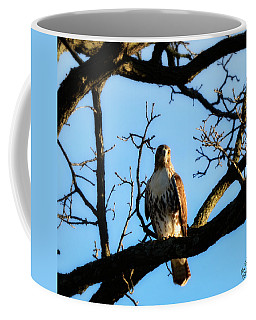 Coffee Mug featuring the photograph Hungry by Ally  White