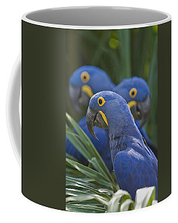 Hyacinth Macaws Anodorhynchus Coffee Mug