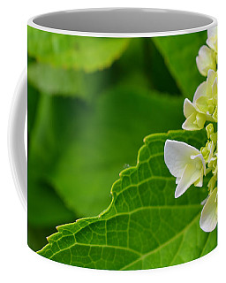 Hydrangea #1 Coffee Mug