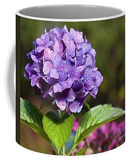 Coffee Mug featuring the photograph Hydrangea by Belinda Greb