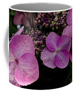 Hydrangea Flowers  Coffee Mug by James C Thomas