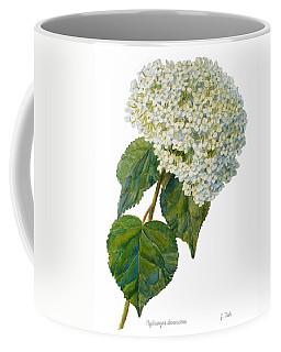 Hydrangea Aborescens Coffee Mug