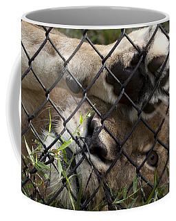 I Want To Go Home - Female African Lion Coffee Mug
