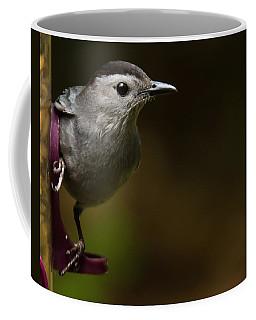 I'm A Cat Bird And I Sound Like One Too Coffee Mug