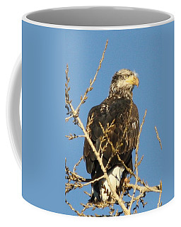 Immature Bald Eagle Coffee Mug