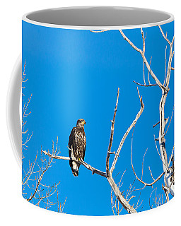 Coffee Mug featuring the photograph Immature Bald Eagle by Michael Chatt