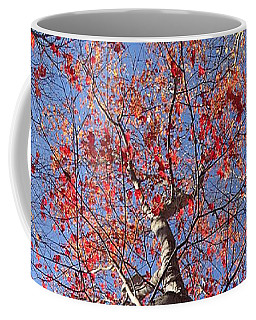 In The Woods 1 Coffee Mug