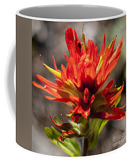 Coffee Mug featuring the photograph Indian Paintbrush by Belinda Greb