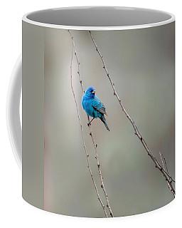 Indigo Bunting Square Coffee Mug