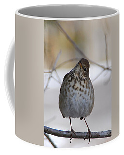 Coffee Mug featuring the photograph Inquisitive Hermit Thrush by Cascade Colors