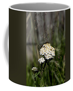 Coffee Mug featuring the photograph Insect On White Flower by Leif Sohlman