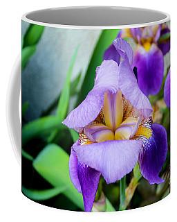 Iris From The Garden Coffee Mug