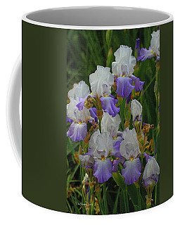 Iris Patch At The Arboretum Coffee Mug