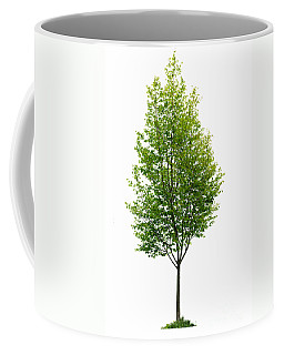 Isolated Young Tree Coffee Mug