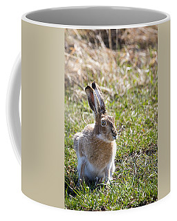 Jackrabbit Coffee Mug