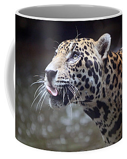 Coffee Mug featuring the photograph Jaguar Sticking Out Tongue by Shoal Hollingsworth