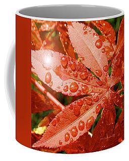 Japanese Maple Leaf With Rain Drops And Sunburst Coffee Mug