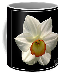 Coffee Mug featuring the photograph Jonquil 1 by Rose Santuci-Sofranko