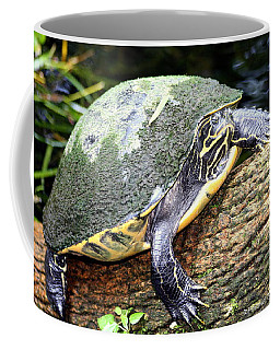 Coffee Mug featuring the photograph Just Chilling by Debra Forand