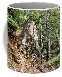 Just Hanging On Old Growth Forest Stump Coffee Mug by Roxy Hurtubise