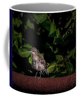 Just Out Of The Nest Coffee Mug